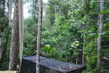Hutan Wisata Mata Kucing