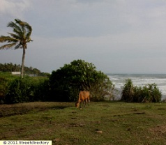 Bali Natural Property Photos