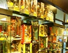 Diabolique Toys Photos