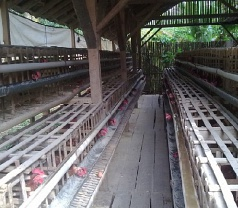 pratamafarm Photos