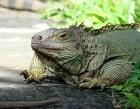 Crocodile & Reptile Park Photos