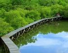 Taman Hutan Raya (TAHURA) NGURAH RAI Photos