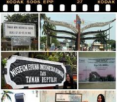 Museum Komodo Photos