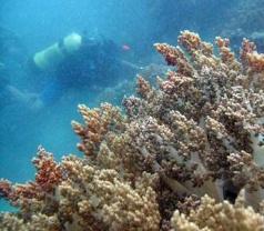 GAHAWISRI ( Indonesian Marine Tourism Association ) Photos