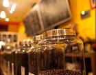 Coffee Tree Photos
