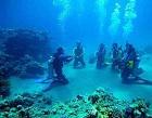 Griya Nuansa Pratama (Dugong Bali Dive) Photos