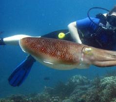 Nautilus Diving Bali Photos